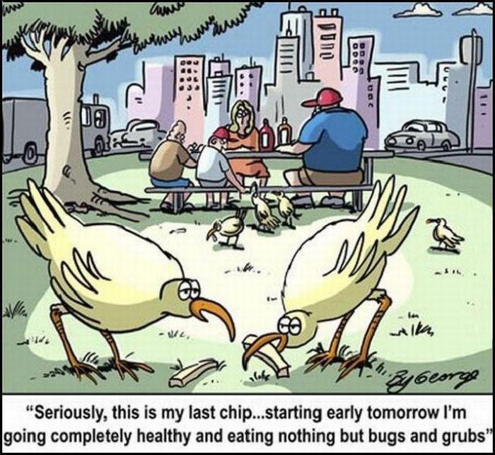 Funny cartoons 15