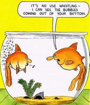 funny fartfish