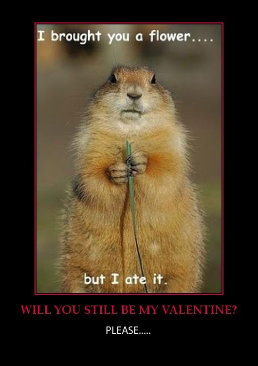 animal valentines day memes - random thoughts for VALENTINES DAY february 14th 2013