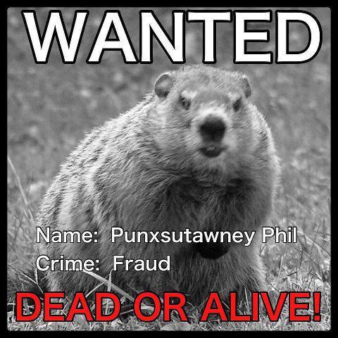 punxsutawney-phil-