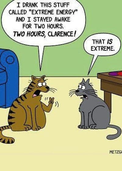 funny-cats-cartoon-joke