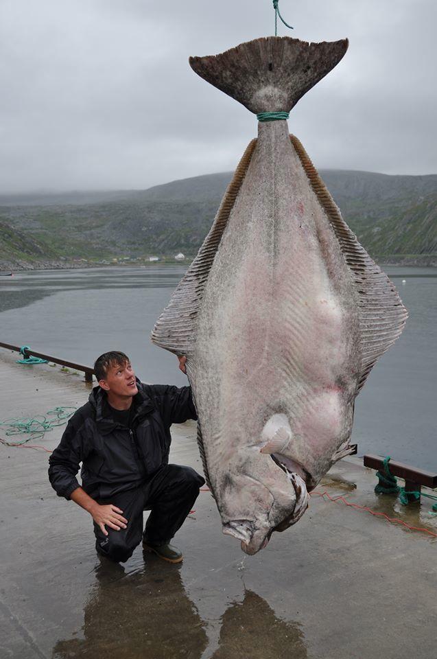 fish-1111-