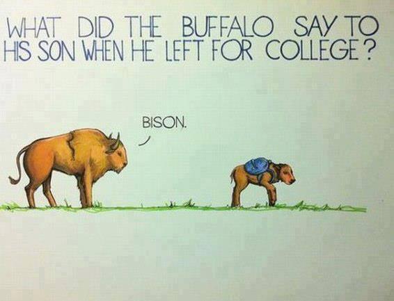 Funny-Buffalo-joke