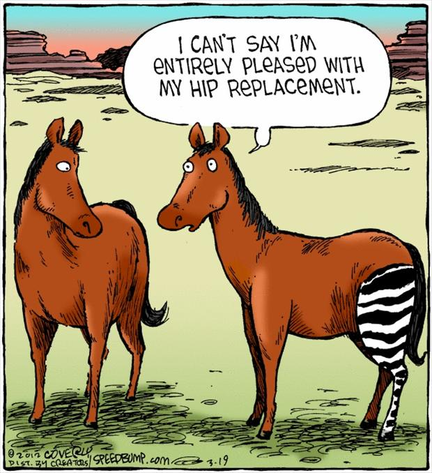 funny-horse-hip-replacement