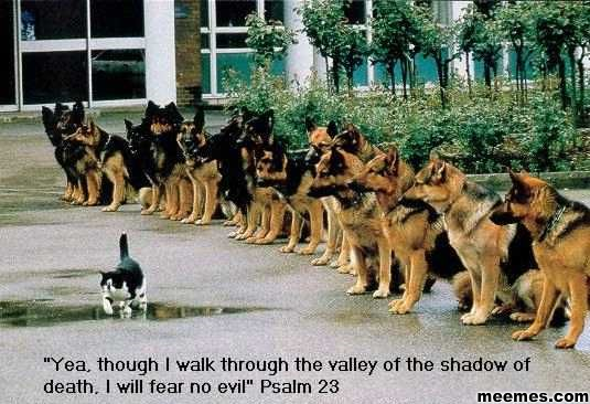 Funny-Animals-Yea-Though-I-Walk-Through-The-Valley-Of-The-Shadow