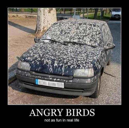 Angry-Birds-Funnies-angry-birds-30418598-500-496