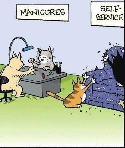 cats-manicure-joke-pic
