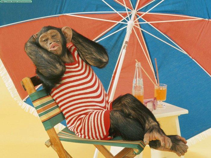 Funny Summer Animals_6