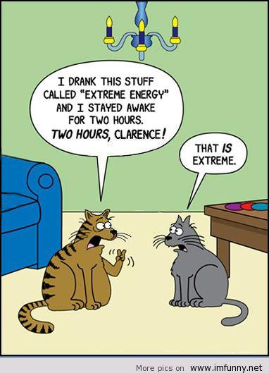 funny-pics-funny-memes-funny-animals-humor-conversations-Favim_com-612586